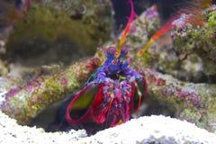 Kleurrijke garnalen Stock Afbeeldingen