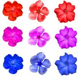 Kleurrijke geïsoleerde bloem Stock Foto's