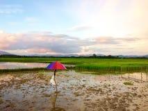 Kleurrijke gebieden stock fotografie