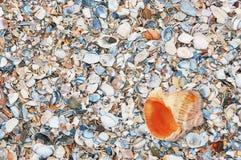 Kleurrijke gebroken overzeese shells achtergrond Stock Afbeelding