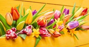 Kleurrijke gele banner met verse de lentebloemen stock foto