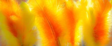 Kleurrijke Pasen veren in zonlicht Stock Foto
