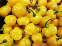 Kleurrijke Gele Habanero-Spaanse pepers, Landbouwers` s Markt stock afbeelding
