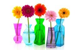 Kleurrijke Gerber in glasvazen Stock Foto's