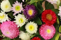 Kleurrijke Gerbera Stock Foto