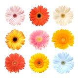Kleurrijke Gerbera Stock Foto's