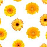 Kleurrijke Gerbera stock afbeeldingen