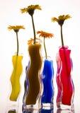 Kleurrijke gerbers Stock Foto's