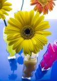 Kleurrijke gerbers Stock Fotografie