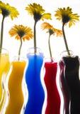 Kleurrijke gerbers Stock Afbeeldingen