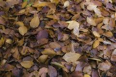 Kleurrijke gevallen bladeren die op de parkvloer leggen stock afbeelding