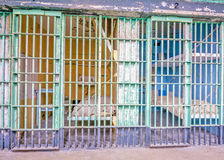 Kleurrijke gevangeniscellen met bedden en gootsteen Royalty-vrije Stock Afbeelding