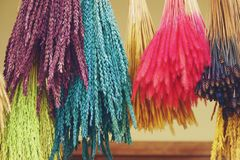 Kleurrijke geverfte padie en van het installatiesgras bloem voor decoratie stock afbeelding