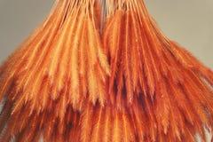 Kleurrijke geverfte padie en van het installatiesgras bloem voor decoratie royalty-vrije stock fotografie
