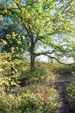 Kleurrijke gloed door de bomen Royalty-vrije Stock Foto's