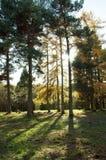 Kleurrijke gloed door de bomen Royalty-vrije Stock Afbeeldingen