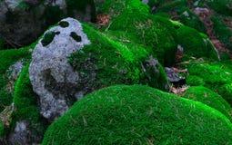 Kleurrijke groene bemoste grote stenen Foto die heldere dichtbegroeid afschilderen Stock Fotografie