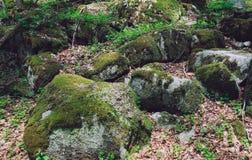 Kleurrijke groene bemoste grote stenen Foto die heldere dichtbegroeid afschilderen Stock Afbeelding