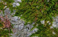 Kleurrijke groene mostextuur Foto die een heldere dichtbegroeide lich afschilderen Stock Afbeelding