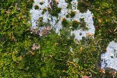 Kleurrijke groene mostextuur Foto die een heldere dichtbegroeide lich afschilderen Royalty-vrije Stock Afbeelding