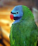 Kleurrijke groene papegaai met hoofd dichte omhooggaand royalty-vrije stock afbeelding