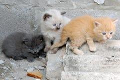 Kleurrijke groep katjes Stock Foto's