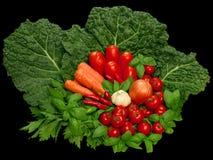 Kleurrijke groep vegeta Stock Afbeelding