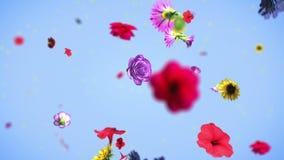 Kleurrijke grote bloemenachtergrond in 4K stock footage