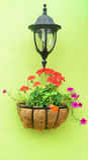 Kleurrijke hangende bloem Royalty-vrije Stock Fotografie