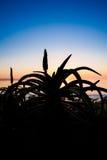 Kleurrijke hemel op het overzees met bloemen vooraan Stock Foto