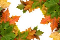 Kleurrijke herfstbladeren royalty-vrije stock foto's