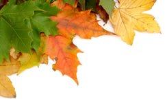 Kleurrijke herfstbladeren royalty-vrije stock foto
