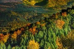 Kleurrijke herfstbossen in de Elzas, Frankrijk Royalty-vrije Stock Fotografie