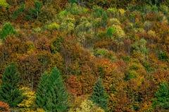 Kleurrijke herfstbossen in de Elzas, Frankrijk Royalty-vrije Stock Afbeeldingen