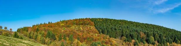 Kleurrijke herfstbossen in de Elzas, Frankrijk Stock Afbeeldingen