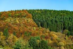 Kleurrijke herfstbossen in de Elzas, Frankrijk Stock Fotografie