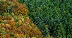 Kleurrijke herfstbossen in de Elzas, Frankrijk Royalty-vrije Stock Afbeelding