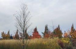 Kleurrijke HerfstScène Stock Foto's