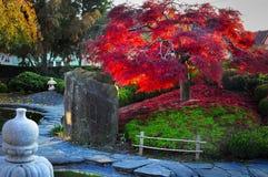 Kleurrijke het gebladerte van de dalingsboom Royalty-vrije Stock Foto's