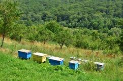 Kleurrijke houten bijenkorven op heuvelhelling Royalty-vrije Stock Foto