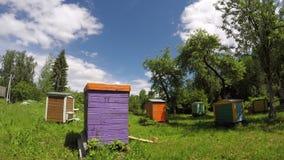 Kleurrijke houten bijenkorven in tuin en wolkenmotie Timelapse 4K stock footage