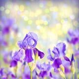 Kleurrijke Ierse de lenteachtergrond Royalty-vrije Stock Afbeelding