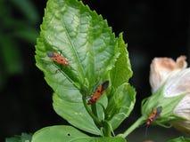 Kleurrijke insecten stock afbeeldingen
