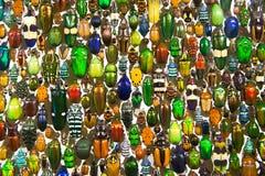 Kleurrijke insecten en kevers Stock Foto's
