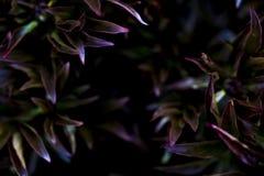 Kleurrijke installaties in een tuin Royalty-vrije Stock Afbeeldingen