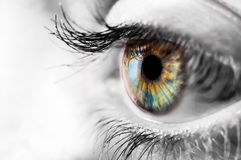 Kleurrijke iris van het menselijke oog met zwarte en wite het omringen Stock Fotografie