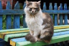 Kleurrijke Kat Stock Foto's