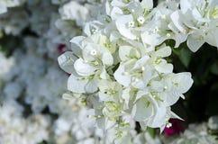 Kleurrijke Kertas-bloem Royalty-vrije Stock Afbeelding