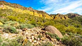 Kleurrijke Kleurrijke Gele en Oranje Geologische die Lagen van Usery-Berg door Grote Keien, Saguaro en andere Cactussen wordt omr Stock Fotografie