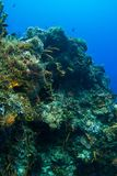 Kleurrijke koraalberg Stock Foto